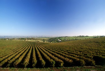 #barossavalley #weingut #winery #kangaroo #australien #südaustralien #blueskytravel
