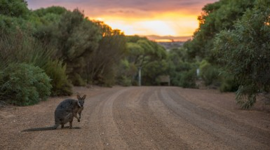 Flinders SA AU