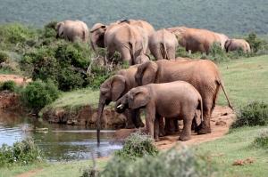 #addonationalpark #elephants #southafrica #portelizabeth #safari
