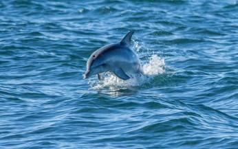 #delphin #blueskytravel #australien