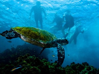 Byron Bay Turtle Sundive NSW AU