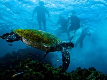 Byron Bay Turtle Sundive NSW AU