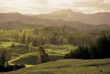 Neuseeland NZ