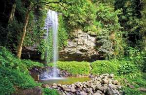 #Dorrigo #Nationalpark #Wasserfall #NSW #australien #blueskytravel