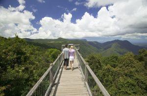 #dorrigo #nationalpark #blueskytravel #queensland #australien
