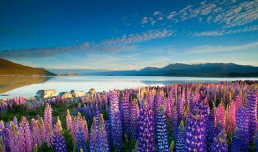 Lake Tekapo Neuseeland NZ