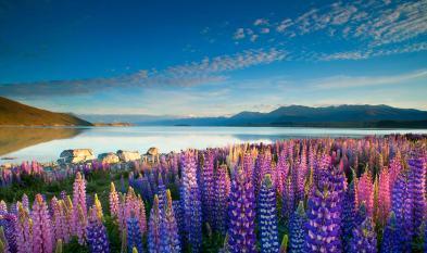 Lake Tekapo Neuseeland