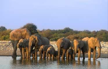 #blueskytravel #reisespezialist #namibia #etosha #lelefanten