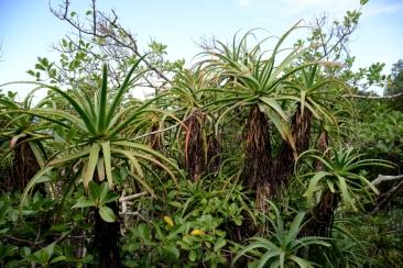Tsitsikamma Nationalpark Südafrika ZA