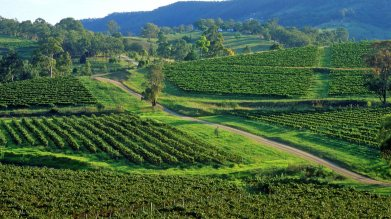 Hunter Valley NSW AU