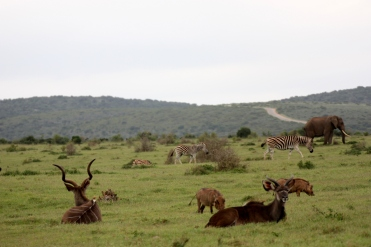 #blueskytravel #südafrika #addonationalpark #elefant