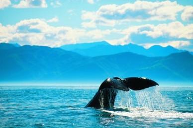 Kaikoura Neuseeland NZ Wal