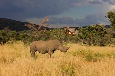 #blueskytravel #reisespezialist #südafrika #kolologamereserve