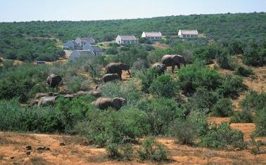 Main Rest Camp Addo Nationalpark Südafrika ZA
