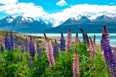 #BlueskyTravel #Reisespezialist #Neuseeland #mountcook