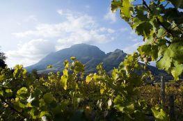 #stellenbosch #winelands #blueskytravel #südafrika