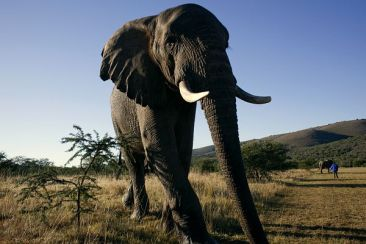 #krugernationalpark #südafrika #blueskytravel #reisespezialist