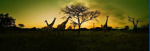 Header Südafrika