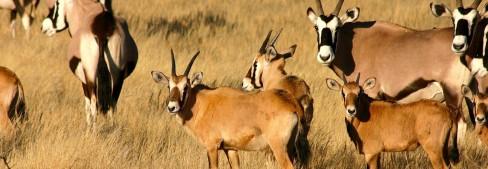 #Etosha #Namibia #OryxAntilopen #JuergenGoetze #Abenteuer #Reisen #Safari #BlueSkyTravel