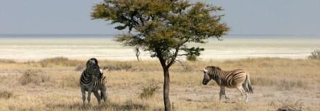 Header Namibia Etosha