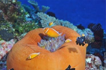Unterwasser Neukaledonien