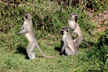 Tier Südafrika