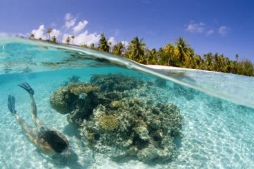 Unterwasser Südsee Tahiti