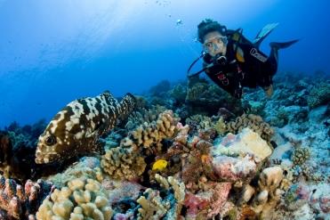 Tahiti Unterwasser