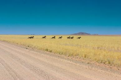 Zebras in der Namib Namibia