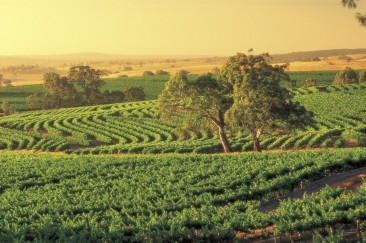 #fleurieupeninsula #southaustralia #südaustralien #blueskytravel #reisespezialist