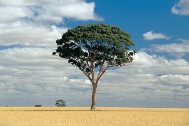 #westernaustralia #australien #blueskytravel