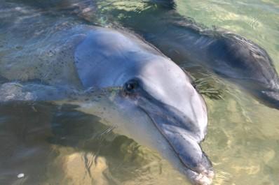 #australien #westaustralien #blueskytravel #reisespezialist #moneymia #delfin
