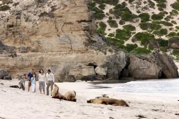 #känguruh #KangarooIsland #southaustralia #südaustralien #blueskytravel #reisespezialist #sealbay #seelöwen