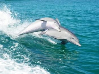 #delfine #Rockingham #penguinisland #pinguine #perth #westernaustralia #australien #blueskytravel