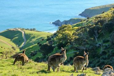 #australien #blueskytravel #reisespezialist #südaustralien #fleurieupeninsula #offpiste