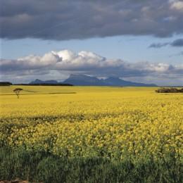 Landschaft WA AU