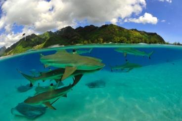 #blueskytravel #reisespezialist #tahiti #französischpolynesien #aranui5 #kreuzfahrt #borabora