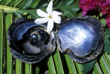 Perlen Tahiti