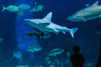 #australien #blueskytravel #reisespezialist #victoria #melbourne #aquarium