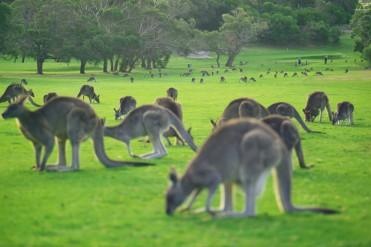 #australien #blueskytravel #reisespezialist #victoria #greatoceanroad #anglesea #golf