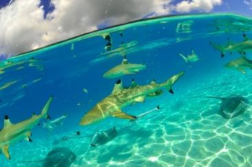 #blueskytravel #reisespezialist #tahiti #französischpolynesien #tahaa