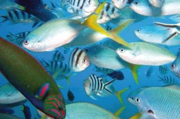 Fidschi Unterwasser