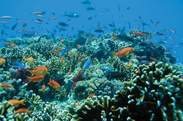 Mamanucas Islands Fidschi Unterwasser