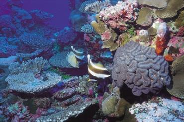 Unterwasser Cook Islands