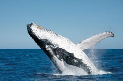 Wal Fraser Island Hervey Bay AU QLD