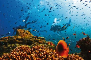 Heron Island Unterwasser Riff Reef AU QLD