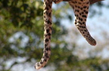 Header Leopard Namibia