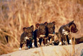 Mlilwane Swaziland ZA