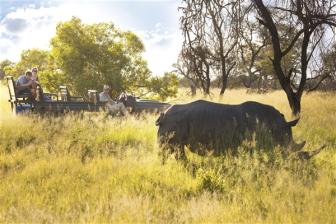 Nashorn Safari Südafrika ZA
