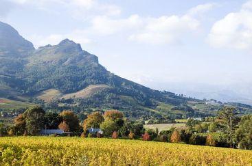 Stellenbosch Winelands Südafrika ZA